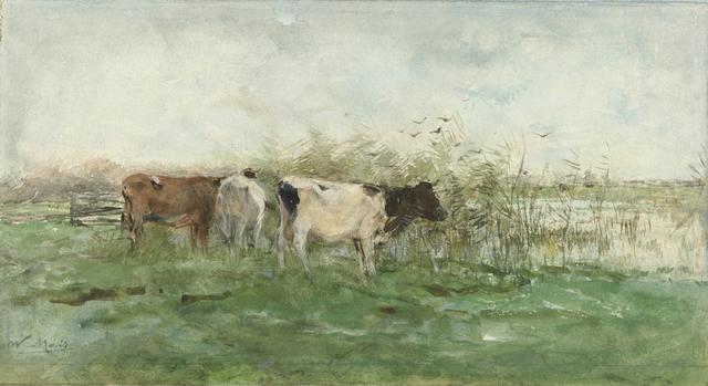 Koeien bij een plas
