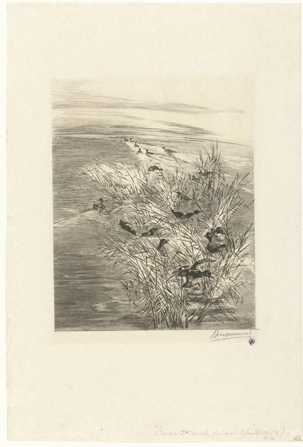 Landschap met eenden of talingen in water tussen riet