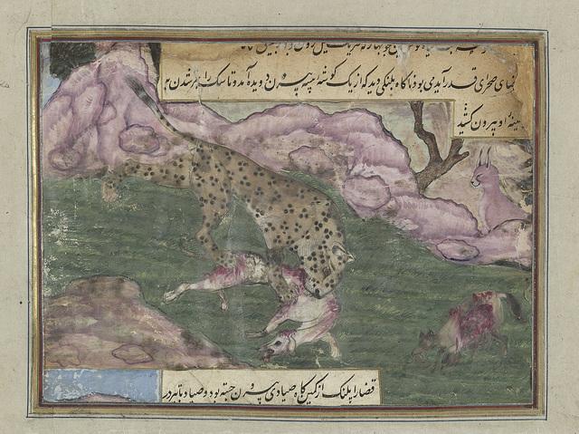 Luipaard doodt een hond