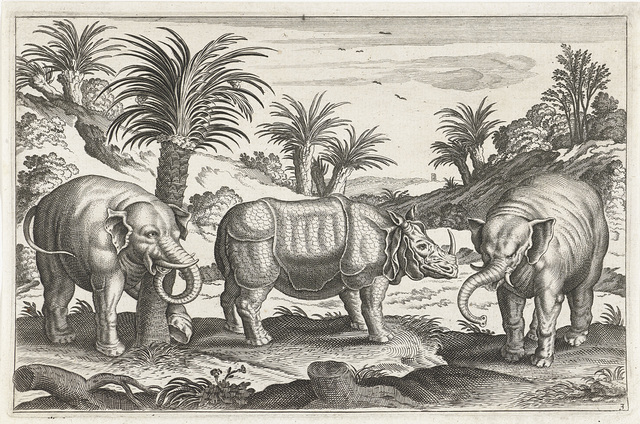 Olifanten en neushoorn