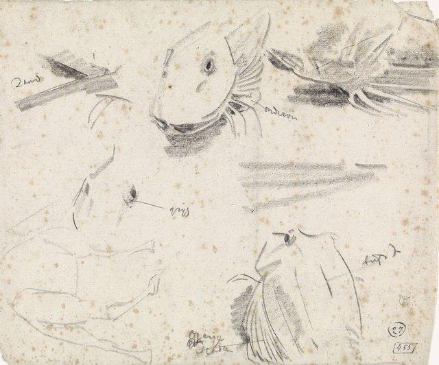 Studies van een poon en een schets van een kameel