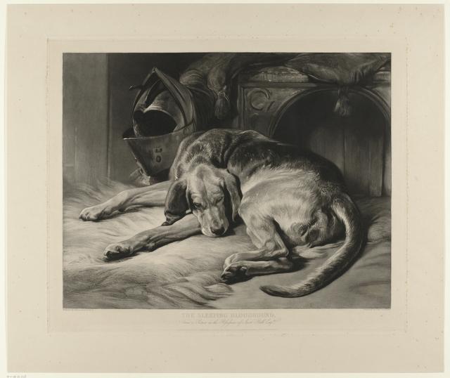 The Sleeping Bloodhound