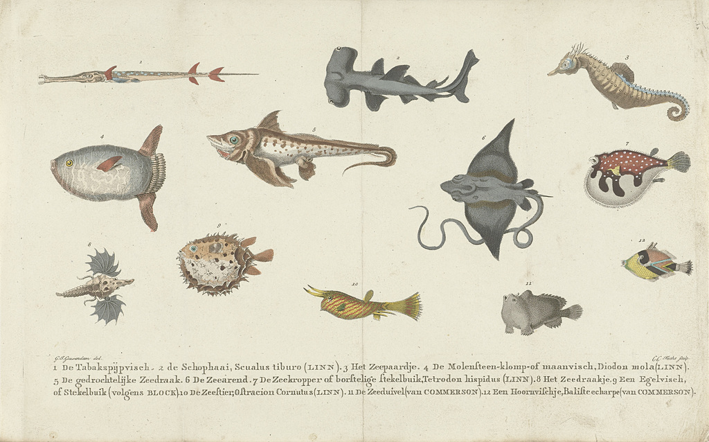 Twaalf verschillende vissoorten