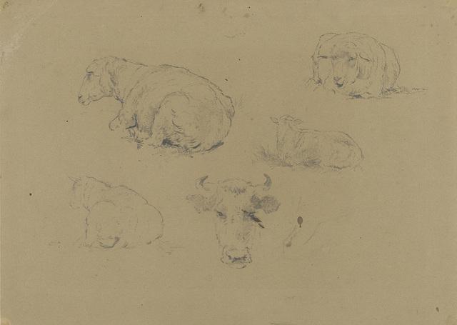 Vier studies van een schaap en één van een koe