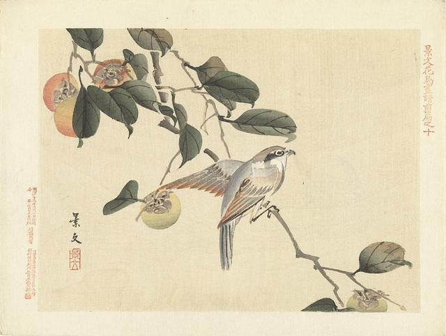 Vogel en kaki