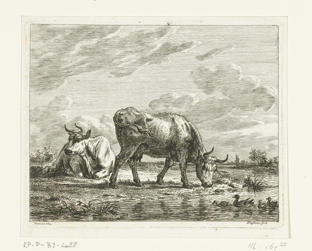 Weiland met twee koeien bij een sloot met eenden - PICRYL Public Domain  Image
