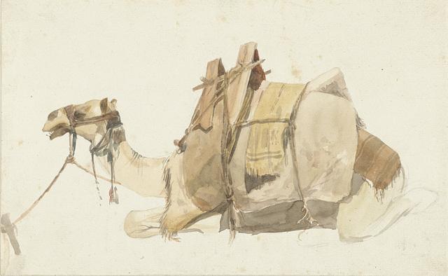Zittende beladen kameel