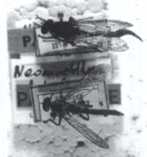 Neomochterus futilis